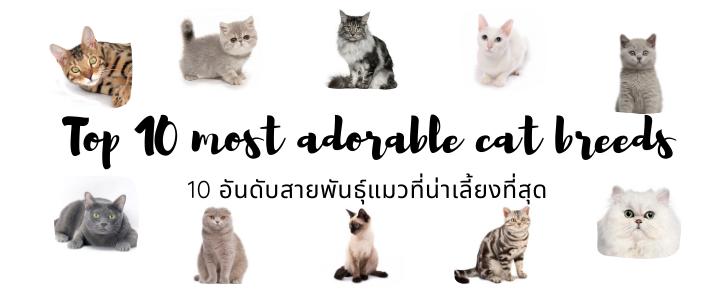 10 อันดับสายพันธุ์แมวที่น่าเลี้ยงที่สุด