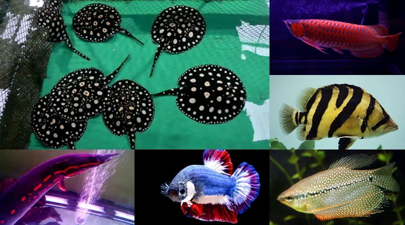 10 อันดับปลาไทย ที่สวยที่สุด จนต้องหามาเลี้ยง