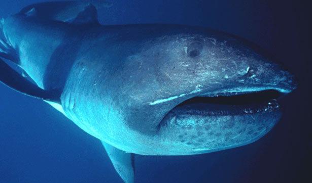 10 สัตว์ใต้ทะเลลึก ที่คุณอาจไม่รู้ว่าพวกมันมีตัวตน