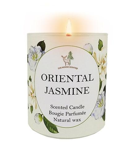 Oriental Jasmine